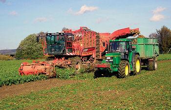 Las inversiones más interesantes para la producción de biocarburantes son las encaminadas a la adaptación del cultivo de la remolacha y de la colza. Foto: Recolección de remolacha.