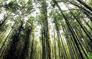 Foto de un bosque (Archivo)