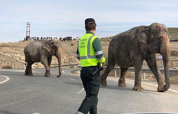 Accidente Pozocañada en el que se han visto liberados varios elefantes. Foto: Twitter