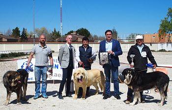 VI Concurso Nacional de Mastines.