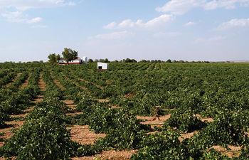 FENAVIN, una herramienta indispensable para la comercialización de los vinos castellano-manchegos