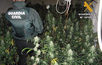 Plantación en Nambroca. Foto: Guardia Civil.