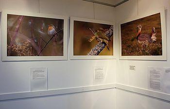 David Jerez detiene el tiempo en la muestra fotográfica 'Yebes 100% natural' de la Sala de Arte de Valdeluz