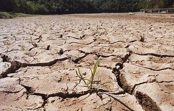 Las explotaciones agrarias en peligro por el tercer año de sequía y los desproporcionados precios de los costes de producción. Foto: ASAJA CLM.