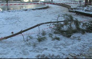 Rama destrozada por el temporal de nieve