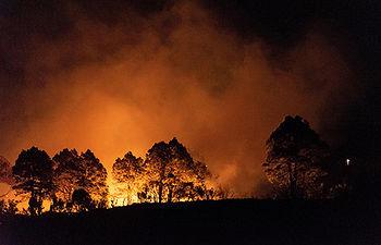 GRAF7436. GARAFÍA (LA PALMA), 14/02/2019.- Incendio forestal declarado esta tarde entre Llano Negro y San Antonio del Monte, en el municipio de Garafía (La Palma), que se extendió rápidamente debido al fuerte viento que hoy ha registrado rachas de hasta 70 kilómetros por horas en esa zona. El incendio se encuentra estabilizado tras amainar el viento y la aparición de la lluvia sobre las 22:00 horas, mientras que los vecinos que habían sido desalojados por prevención han vuelto ya a sus casas. EFE/Miguel Cal