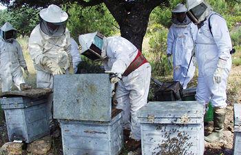 Imagen de archivo de un grupo de apicultores trabajando en sus colmenas.