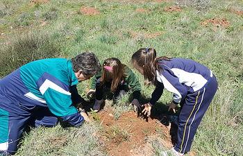 Se han plantado cien ejemplares de árboles autóctonos en el entorno de la ciudad.