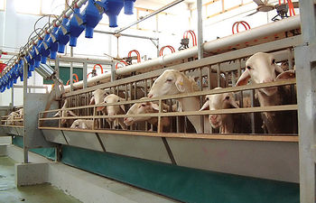 La Fundación, para garantizar la calidad y el origen de la carne, realiza periódicamente inspecciones sobre ganaderías, cebaderos, mataderos y salas de despiece, inscritos en sus registros.