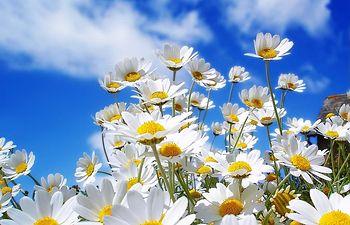 Buen tiempo - Soleado - Primavera.