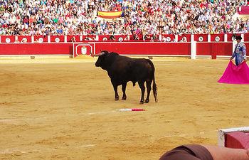 Impresionante el trapío mostrado por Los Samueles en la corrida del 12-09-15 de la Feria de Albacete, sin embargo no dieron el juego suficiente para el lucimiento de los toreros.