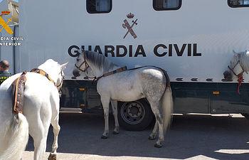 La Guardia Civil participa en la XXXIX edición de la Feria Ganadera de Castilla-La Mancha