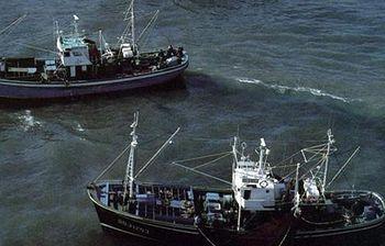 Pescadores faenando (Foto:archivo)