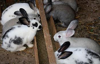 Conejos. Foto de Archivo