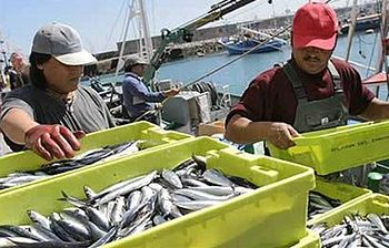 Llegada a puerto de pescadores. Foto: Foto:Ministerio.