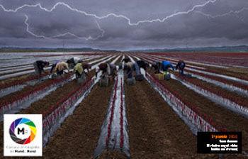Fotografía ganadora del Concurso de Fotografía del Mundo Rural 2014. Foto: UPA.