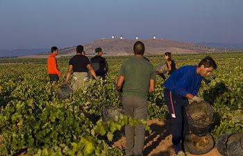 DO La Mancha en el tramo final de  vendimia con la blanca airén