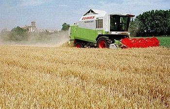 Agricultura. Foto: EFE.