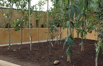 Interior del invernadero del Jardín Botánico