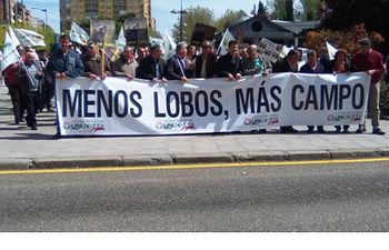 Ganaderos de toda Castilla y León se manifiestan en Zamora para protestar por los daños que están causando el lobo y la fauna silvestre en las explotaciones agrícolas y ganaderas. Foto: COAG.