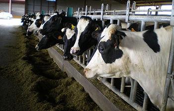 ASAJA consigue del Gobierno financiación adicional para reestructurar la deuda de los ganaderos de leche. Foto: ASAJA CLM.