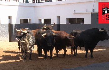 Toros desde el Apartado - Feria Taurina - 17-09-18