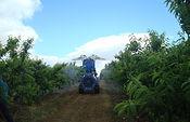 Aprobada la actualización de la normativa sobre comercialización de determinados medios de defensa fitosanitaria. Foto: Ministerio de Agricultura, Alimentación y Medio Ambiente