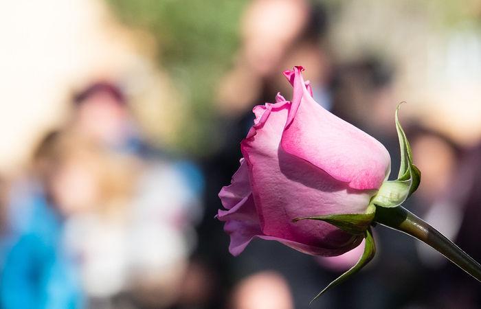Concentración por el Día Internacional de la Eliminación de la Violencia contra las Mujeres, convocado por la Red Feminista de Albacete