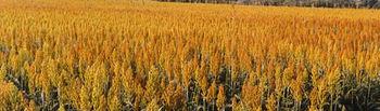 Campo de cereales. Foto: Ministerio de Agricultura, Alimentación y Medio Ambiente