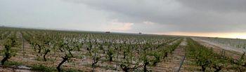 Daños causados por la tormenta: Foto: UPA Alabcete.
