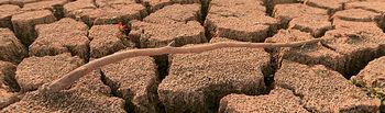 Sequía. Foto de Archivo