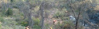 Incendio de Liétor (Albacete)