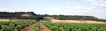 Campo de viñas. / Foto: Banco de imágenes y sonidos del Intef.