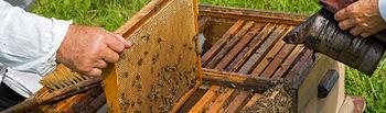 El Ministerio de Agricultura, Alimentación y Medio Ambiente publica la convocatoria de subvenciones para promover la investigación en el sector apícola. Foto: Ministerio de Agricultura, Alimentación y Medio Ambiente
