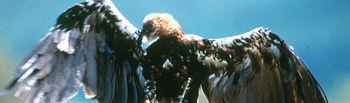La Consejería de Industria, Energía y Medio Ambiente ha firmado un convenio de colaboración con el Ayuntamiento de Urda (Toledo) para fomentar la gestión sostenible de los montes y terrenos de titularidad pública y, con ello, favorecer la conservación de especies animales en peligro de extinción, como el lince ibérico y el águila imperial.