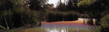 Biodiversidad.. Foto: Ministerio de Agricultura, Alimentación y Medio Ambiente