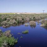 En las Tablas de Daimiel el elemento vegetal de mayor interés es la comunidad acuática.
