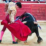 José Garrido en su primer toro con la muleta.