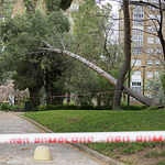 El viento tira un árbol en el Parque Lineal de Albacete, concrétamente en la calle Alcalde José María de Miguel