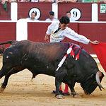 """El torero aragonés afincado en Albacete, Paul Abadía """"Serranito"""", en un lance al toro """"Pimentito"""", del ganadero Samuel Flores, durante la pasada Feria de"""