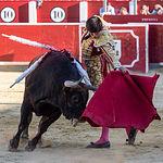 Primer toro de Roca Rey en la Corrida Benéfica de Asprona del 11 de junio de 2017
