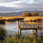 Castilla-La Mancha está muy comprometida con la protección de la Diversidad Vegetal. En la imagen, Masegar en las Tablas de Daimiel (Ciudad Real).