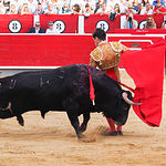Rubén Pinar - Su primer toro - Feria Albacete - 17-09-16