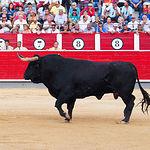 Selección toros ganadería Samuel Flores - Corrida 08-09-16