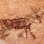 Representación de un cérvido en el Abrigo Grande de Minateda.
