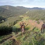 El cazador juega un papel decisivo en la gestión del medio natural con sus buenas prácticas cinegéticas.