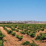La vid constituye una de las principales fuentes de ingresos de las gentes de estos parajes. Foto: Campo de Criptana.