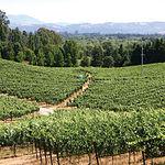 El viñedo constituye una de las señas de identidad de CLM, siendo un importante sustento de la economía regional.