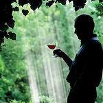Al ser una bebida alcohólica, y a pesar de sus bondades, el vino debe de ser bebido siempre con moderación.