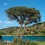 Vista de la laguna del Arquillo. Su vegetación, tanto acuática como marginal, posee un elevado interés botánico.
